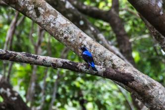 Bright blue bird
